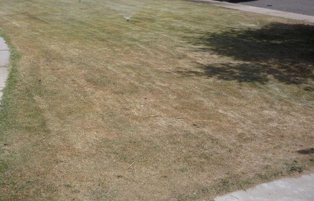 How Often Should I Water My Summer Gr In Phoenix Arizona